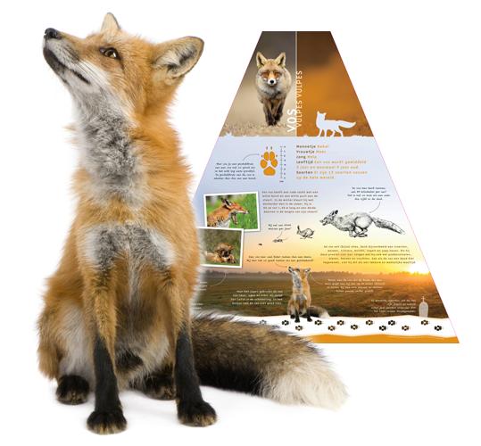 Ecoduct meedenpad groningen informatietafel vos bureau biota - Hoe een boom te verlichten ...