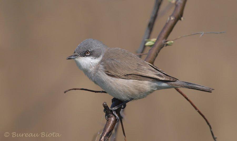 Vogels Nederland Tuin : Vogelsoorten lees alles over de tuinvogels in nederland tip